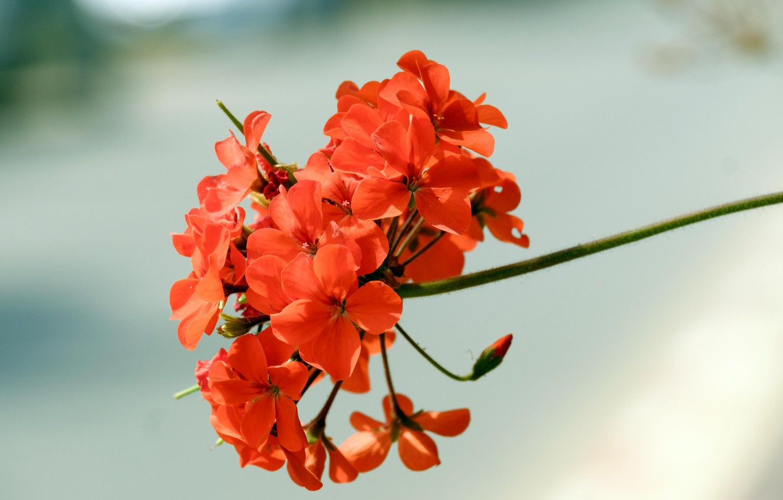 Photo wallpaper flower, petals, orange
