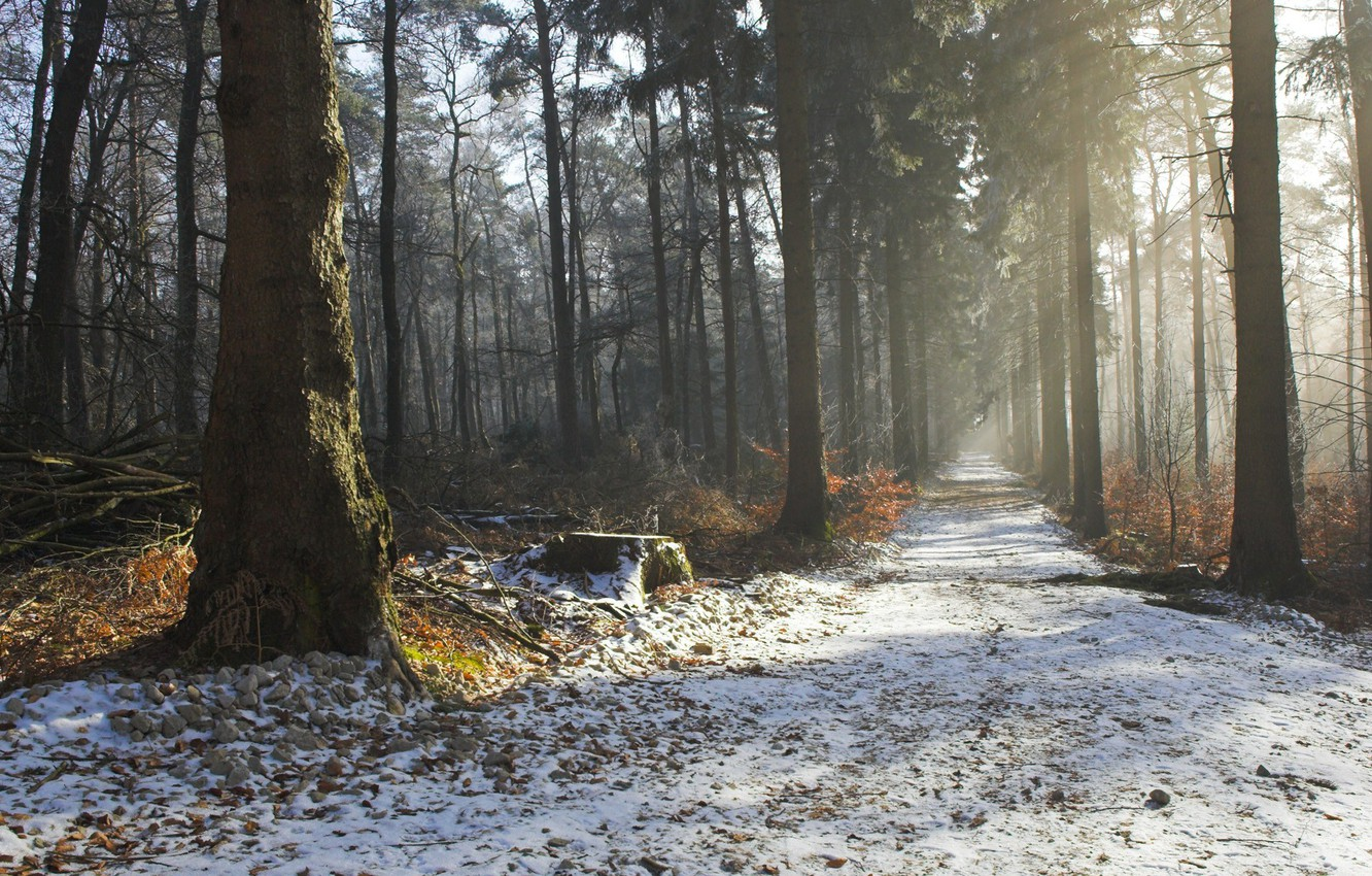 Photo wallpaper winter, road, autumn, forest, trees, nature, beauty, morning, haze