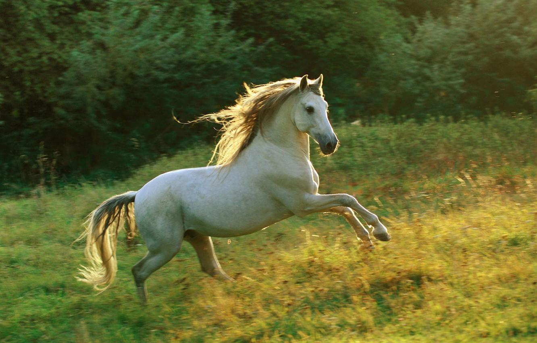 Photo wallpaper horse, meadow, running