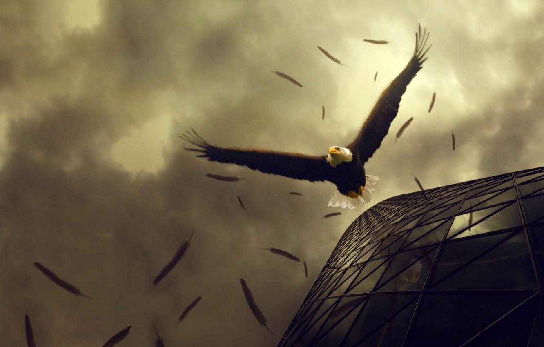 Photo wallpaper flight, eagle, drop