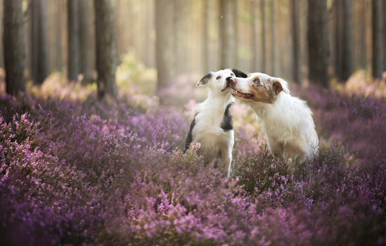 Photo wallpaper forest, dogs, friends