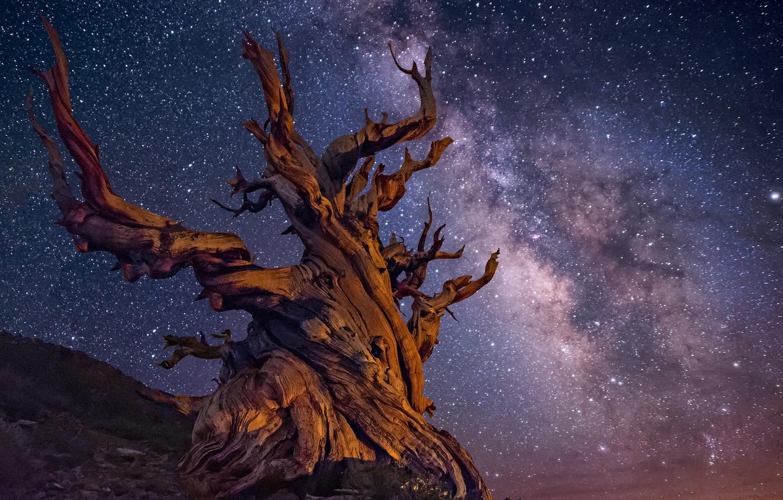 Photo wallpaper the sky, stars, night, tree, the milky way
