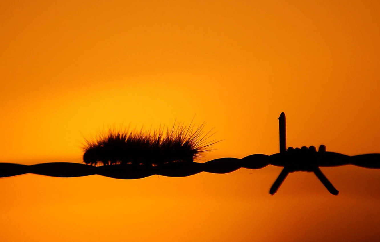 Photo wallpaper orange, wire, Caterpillar