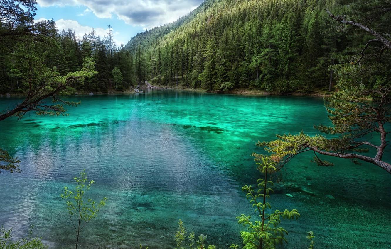 Photo wallpaper forest, trees, lake, Austria, Green Lake, Green lake