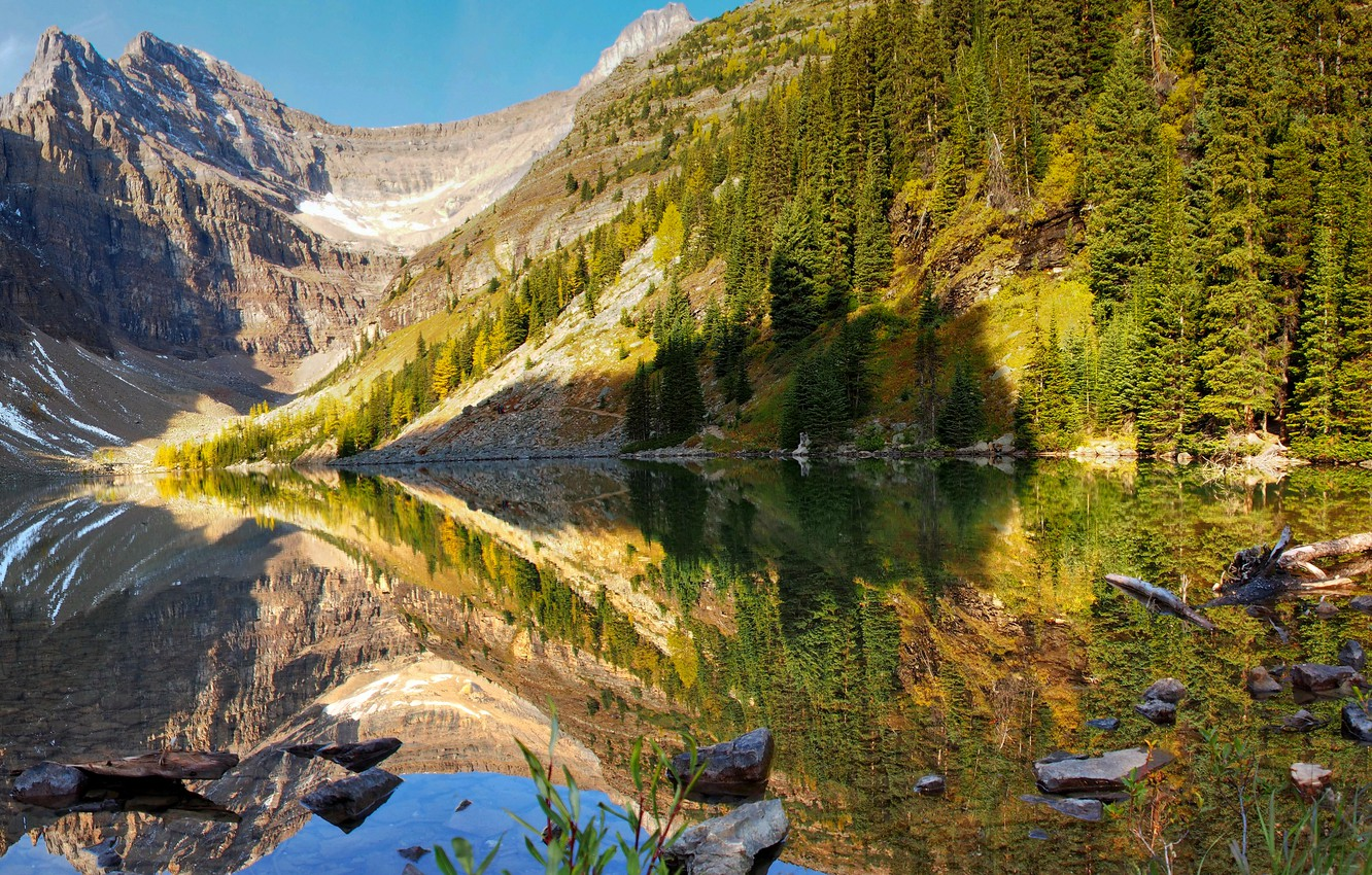 Photo wallpaper forest, water, trees, mountains, lake, reflection, stones, shore, Canada, driftwood, Banff