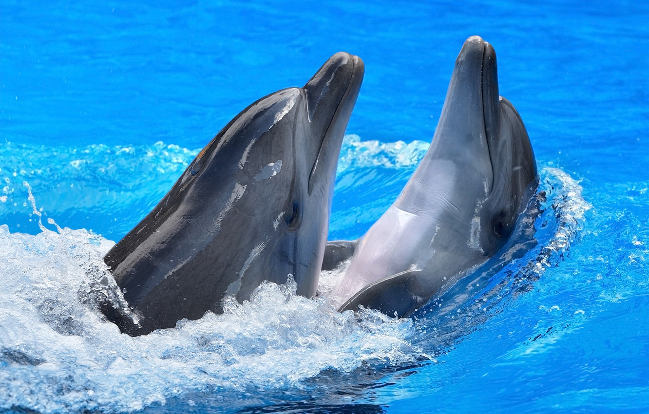 Photo wallpaper water, glare, dolphins
