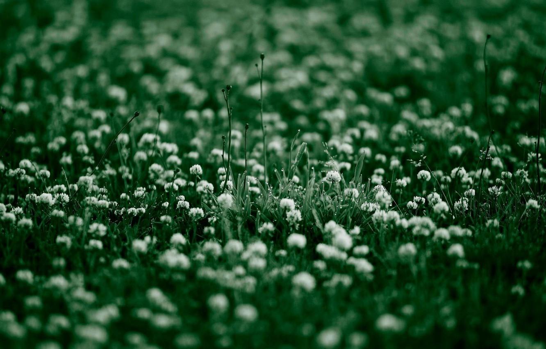 Photo wallpaper greens, summer, grass, plants, clover