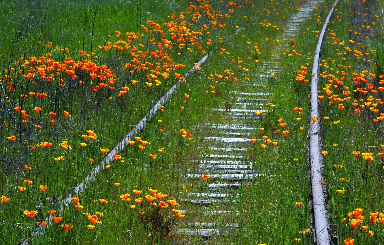 Photo wallpaper summer, flowers, nature, railroad