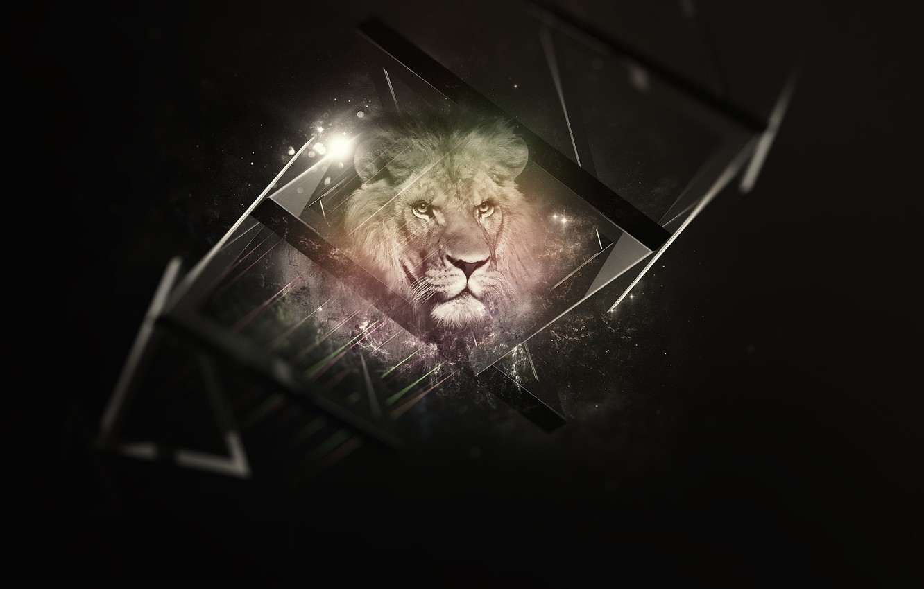Photo wallpaper black, background, Lion