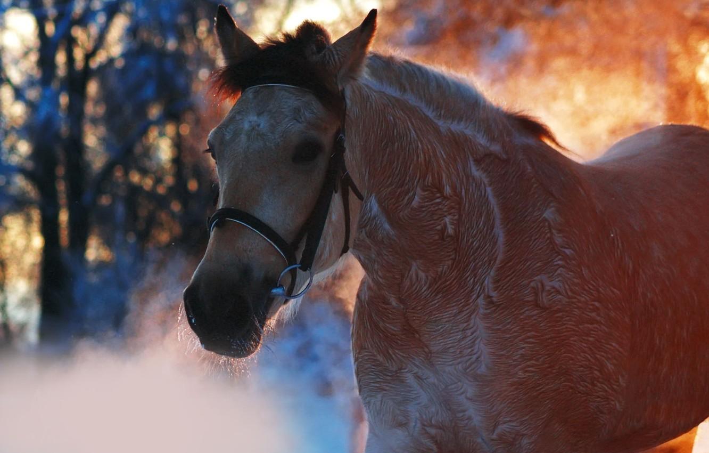 Photo wallpaper animals, horse, horse