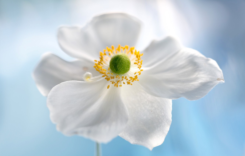Photo wallpaper flower, nature, petals