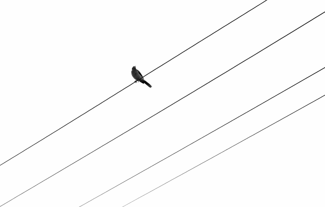 Wallpaper Background Bird Wire Images For Desktop Section