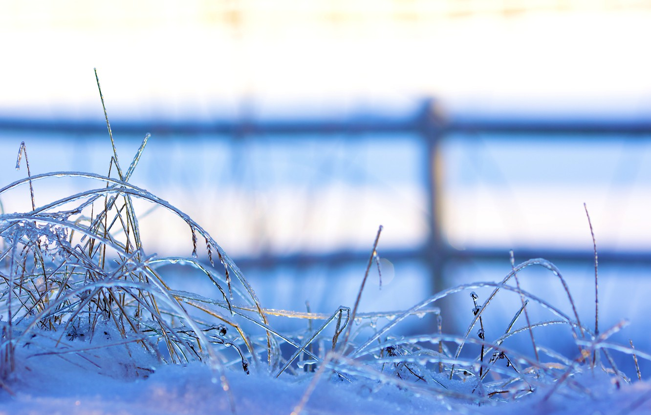 Photo wallpaper winter, grass, snow, nature, the fence, ice, the fence, grass, macro., freezing, frozen