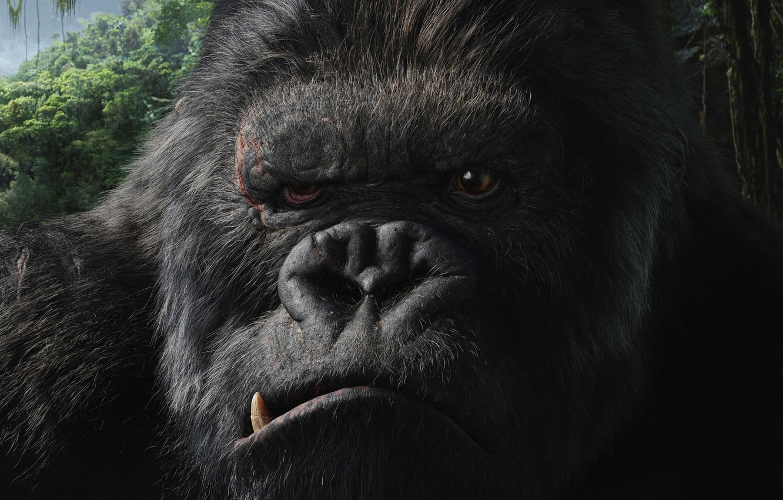 Photo wallpaper movie, the film, King Kong, King Kong