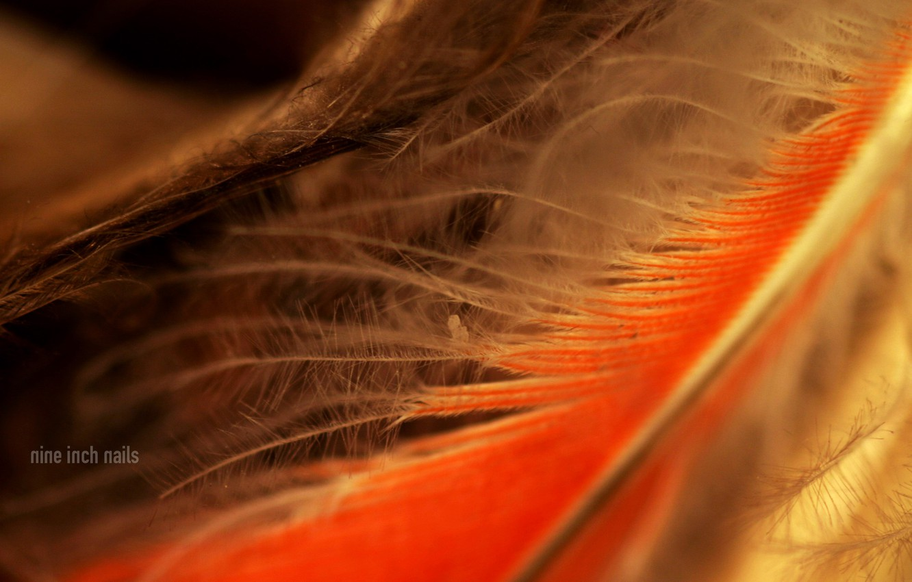 Wallpaper Feathers Nine Inch Nails Images For Desktop Section
