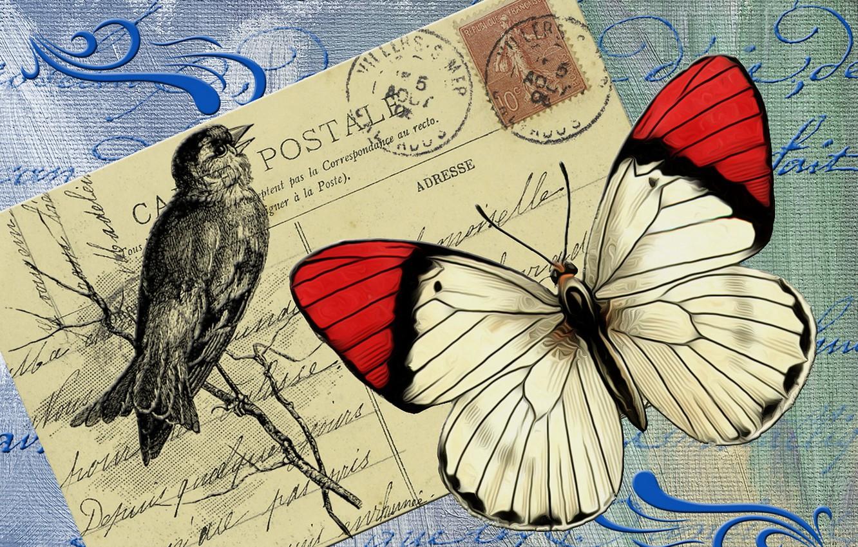 Photo wallpaper background, bird, butterfly