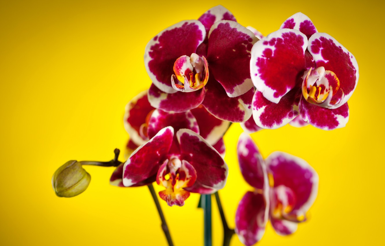 Photo wallpaper flowers, background, orchids, motley