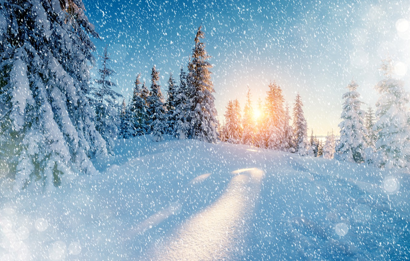 Photo wallpaper Nature, Winter, Snow, Spruce, Snowflakes