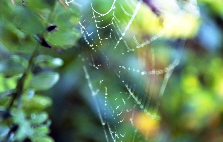 Photo wallpaper grass, drops, macro, nature, Rosa, plants, web, spider, branch