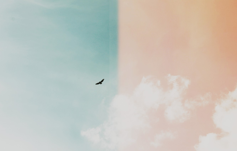 Photo wallpaper the sky, bird, colorful