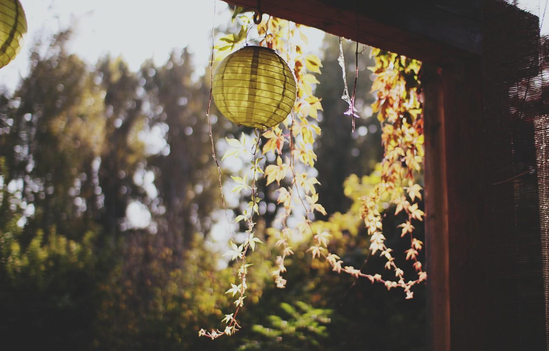 Photo wallpaper leaves, plant, flashlight