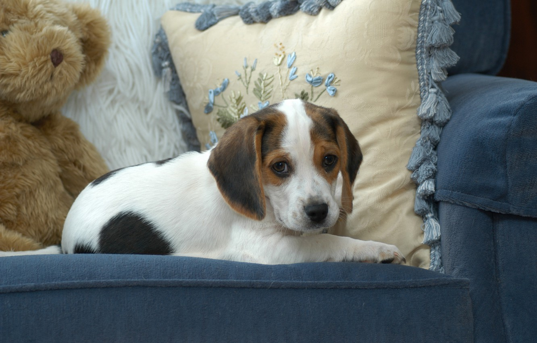 Photo wallpaper blue, toy, dog, chair, bear, cute, puppy, pillow, Wallpaper from lolita777