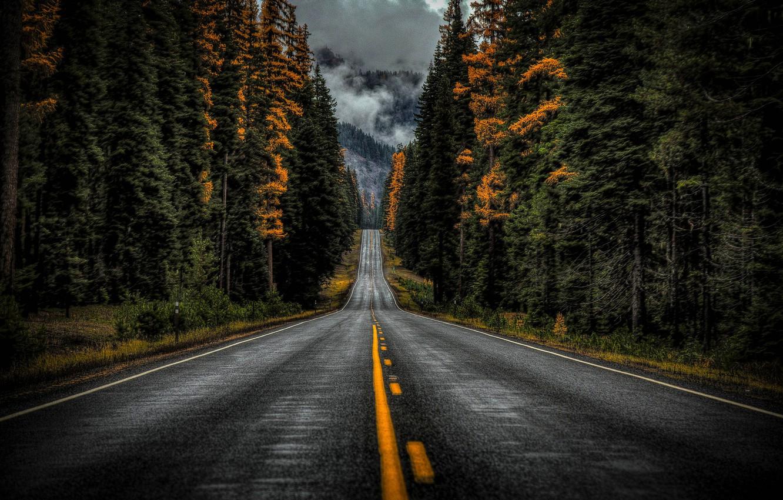 Photo wallpaper road, autumn, forest, trees, Washington, Washington State, Highway 410