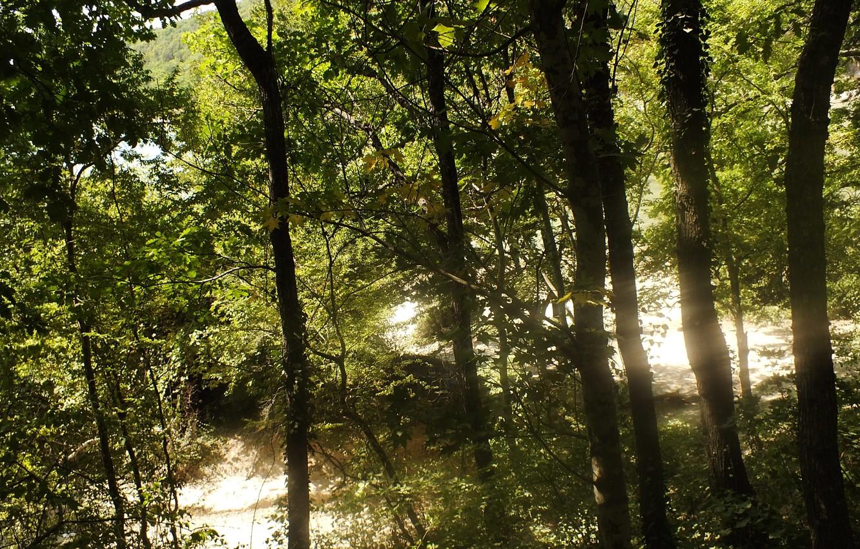 Photo wallpaper forest, the sun, nature, Sukko
