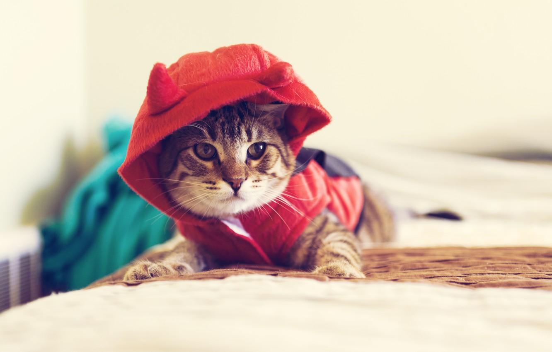 Photo wallpaper cat, look, macro, animal, clothing, hood