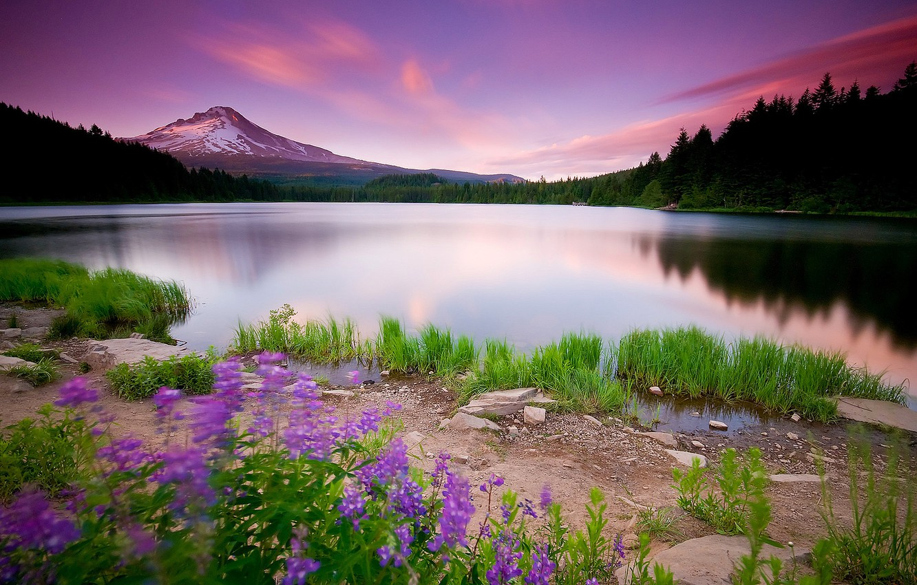 Photo wallpaper the sky, clouds, trees, landscape, sunset, flowers, mountains, the way, lake, nature