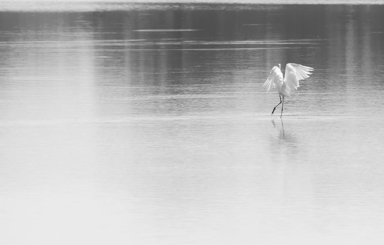 Photo wallpaper nature, lake, bird