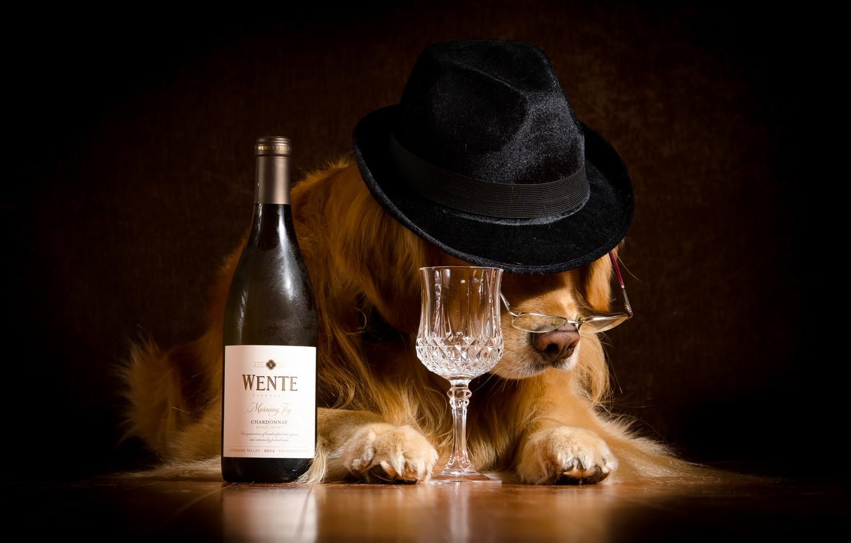 Photo wallpaper mood, wine, bottle, humor, hat, glasses, glass, Retriever