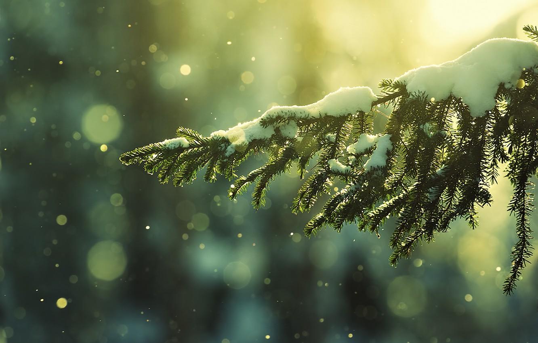 Photo wallpaper winter, snow, nature, spruce