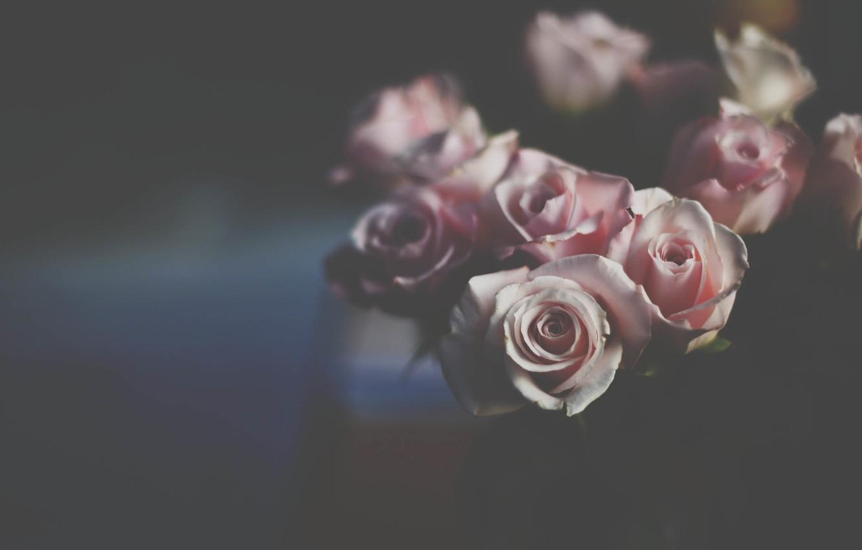 Photo wallpaper flowers, roses, petals, pink