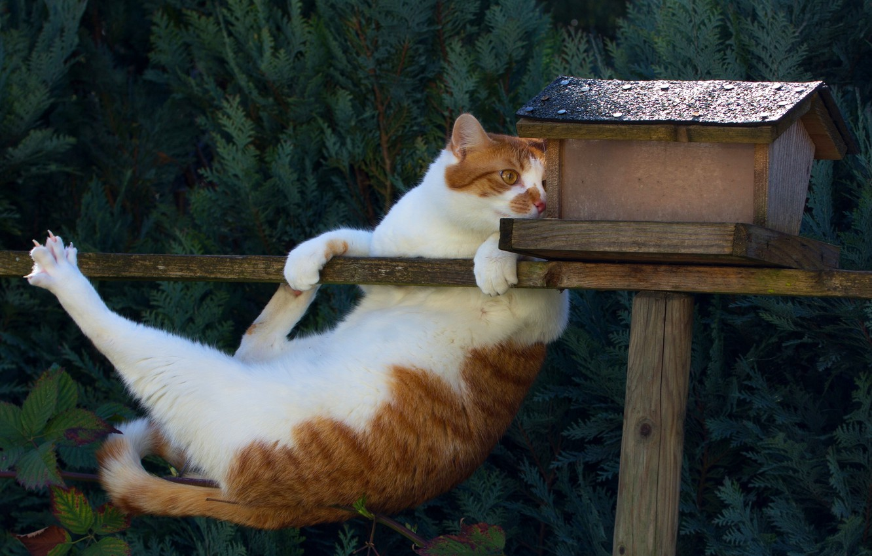 Photo wallpaper cat, the situation, birdhouse, acrobat