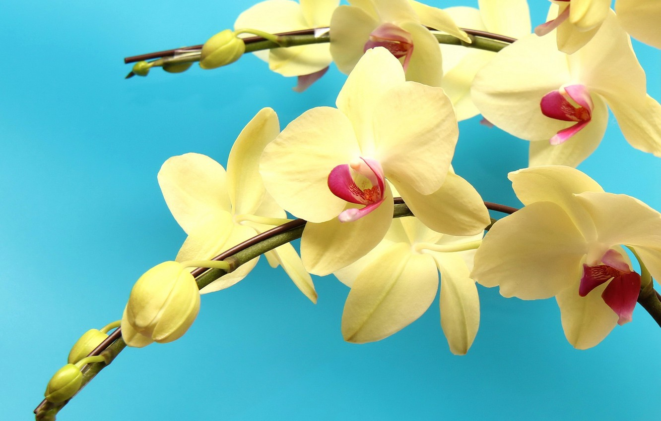 Photo wallpaper branch, orchids, exotic