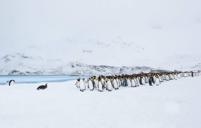 Photo wallpaper landscape, nature, penguins