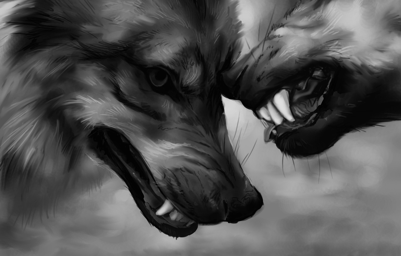Photo wallpaper power, fangs, wolves, aggression, power