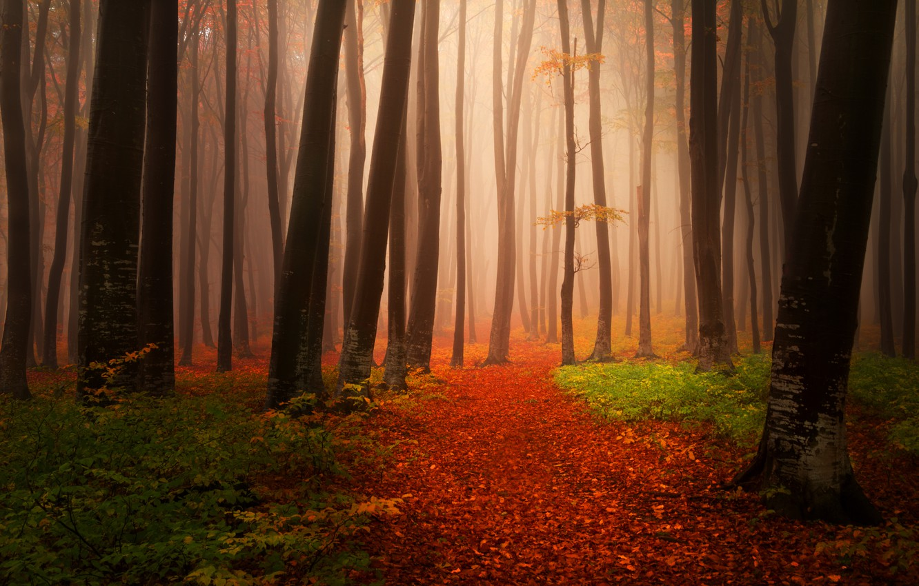 Photo wallpaper autumn, forest, leaves, trees, nature, fog, path, Landscapes