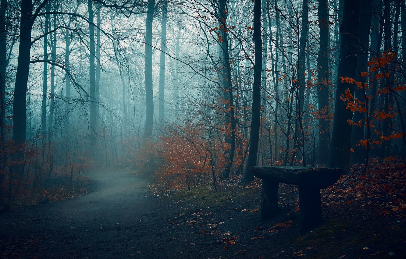 Photo wallpaper road, autumn, fog, Park, bench