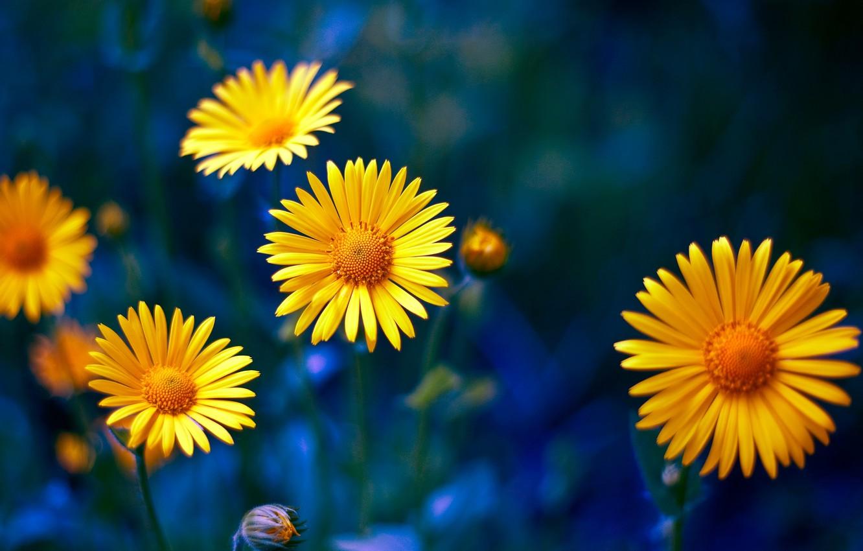 Photo wallpaper macro, nature, petals, yellow flowers