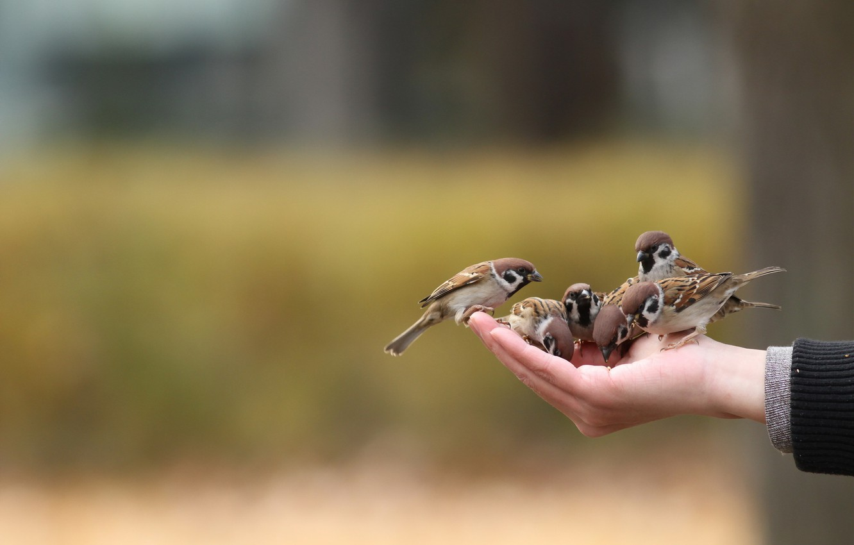 Photo wallpaper birds, mood, hand