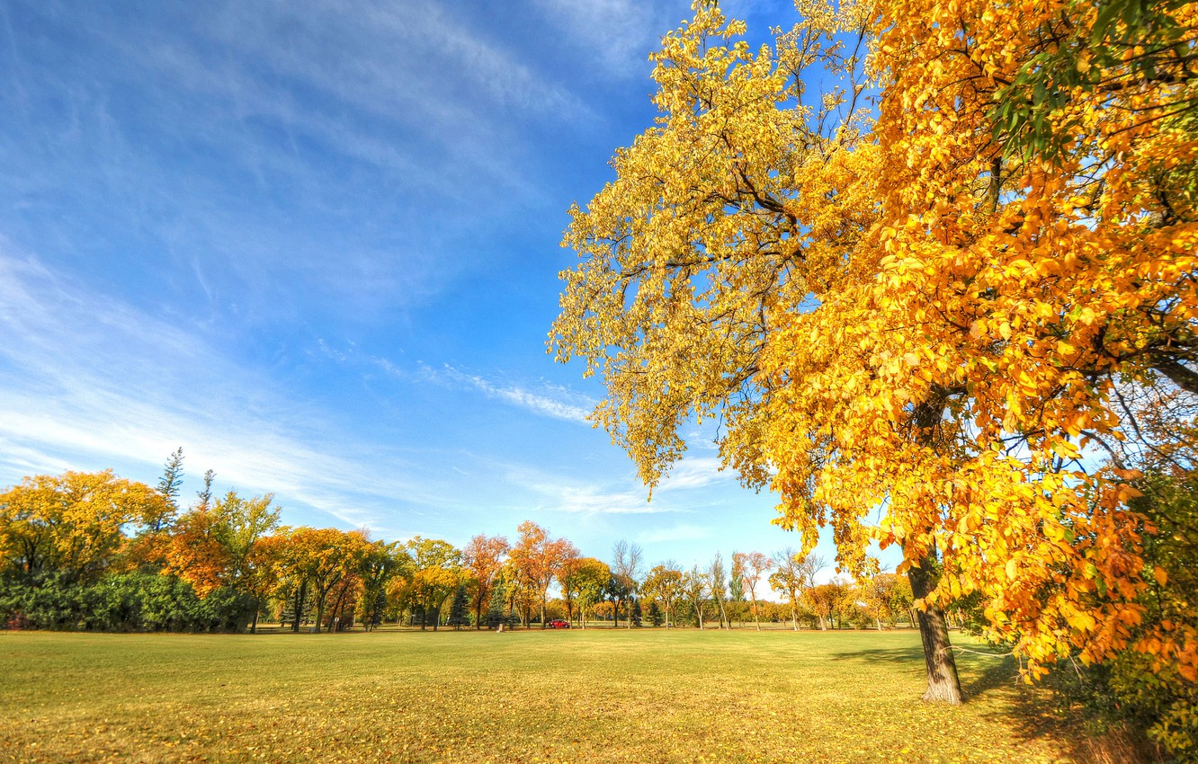 Photo wallpaper autumn, the sky, grass, leaves, trees