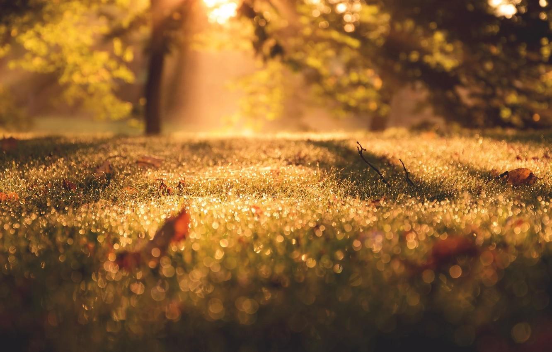 Photo wallpaper autumn, macro, light, morning, bokeh, September