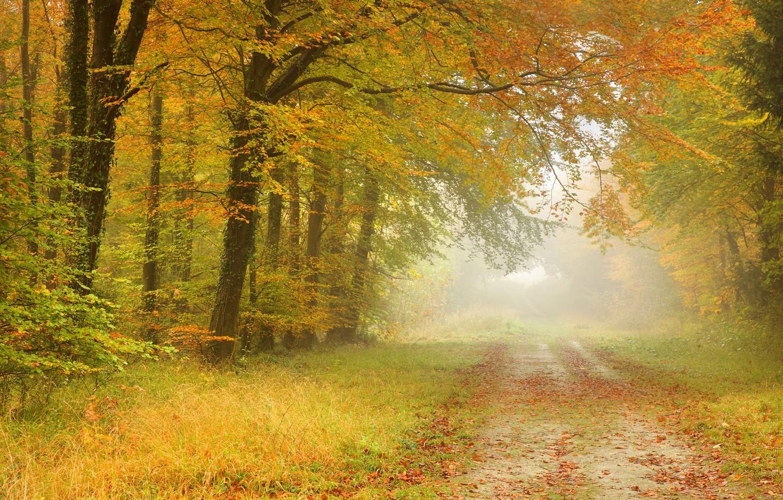 Photo wallpaper road, autumn, forest, leaves, trees, landscape, fog