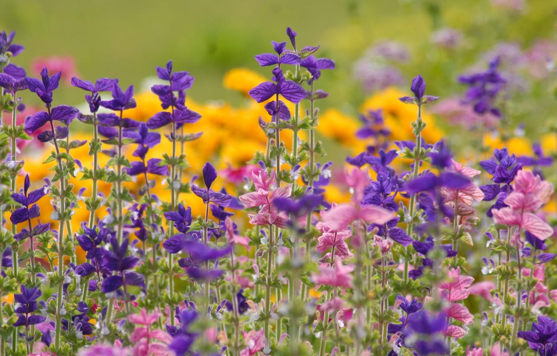 Photo wallpaper summer, field, meadow
