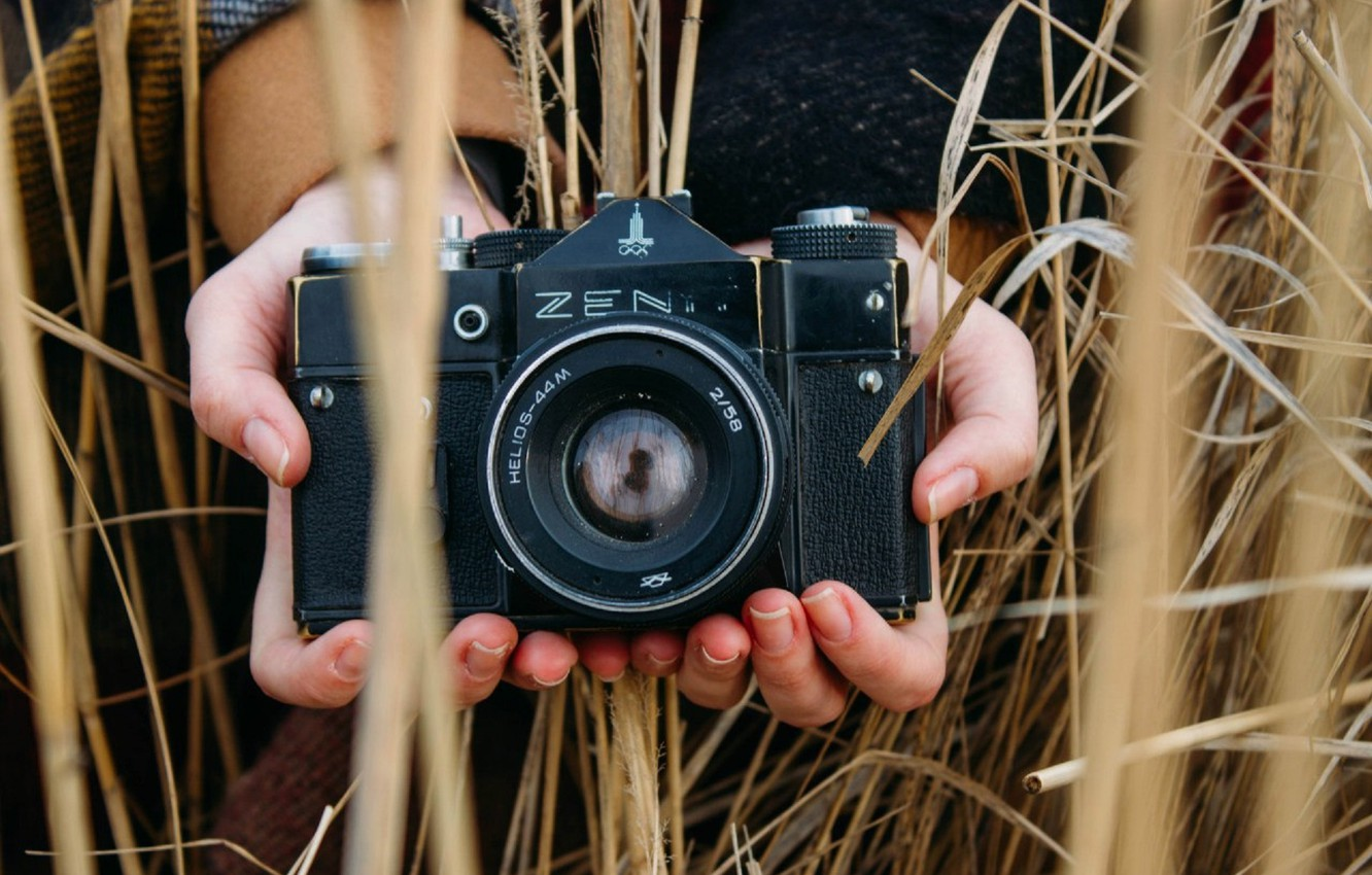 Photo wallpaper field, retro, hands, spikelets, the camera