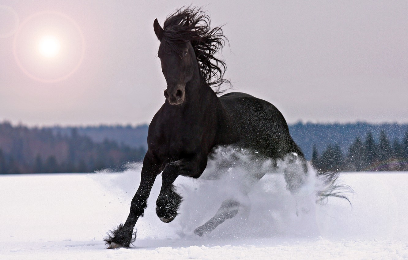 Wallpaper Winter Animals Snow Horse Black Images For