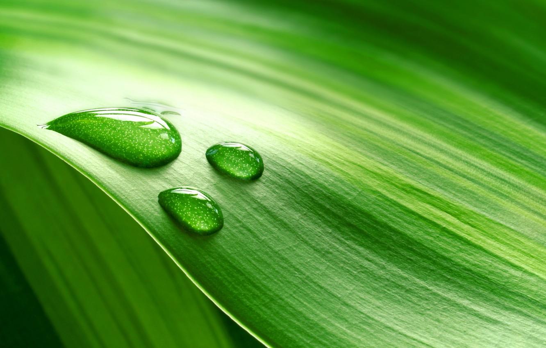 Photo wallpaper greens, macro, sheet, Rosa, drop