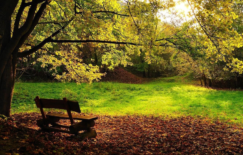 Photo wallpaper trees, bench, foliage, Autumn